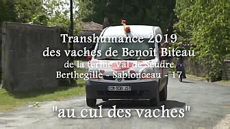 20ème Transhumance Solidaire des Vaches Maraichines de Benoît Biteau @Identi_Terre