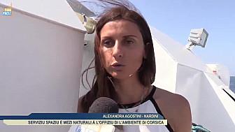 Ajaccio : L'OEC installe de nouveaux Refuges Artificiels pour la Faune Sous-Marine