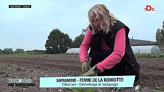 Saveurs du Terroir - Le safran la P'tite Fée Crocus de la Baie de Somme d'Anne POUPART  @TVdeschefs