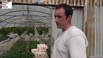 GlobalGeoNews / Face au Covid, une ferme bretonne se réinvente