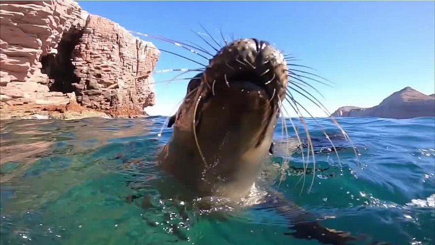 Approche Rurale TV  : Pierre Frolla 'le Coeur de l'Océan' à Los Islotes au Mexique  @PierreFROLLA  @greglecoeur